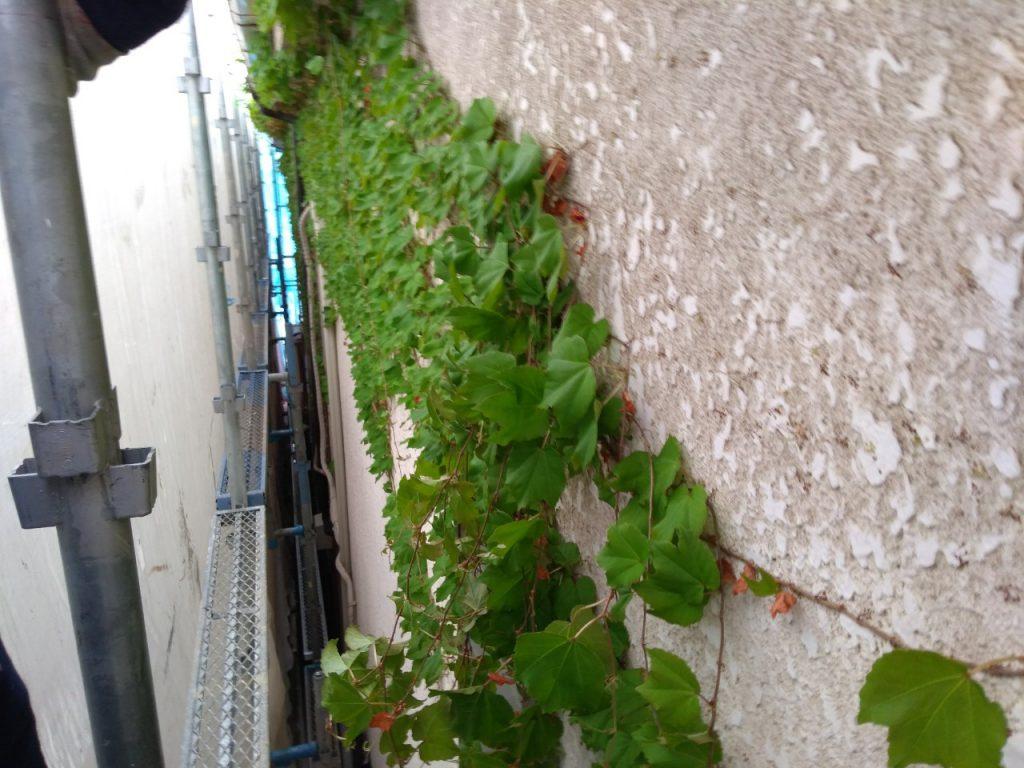 大田区H様邸 外壁・屋根塗装工事のサムネイル画像5